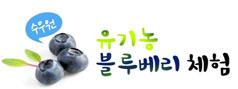 [여름체험특가]수우원 블루베리따기+물놀이+컵빙수(파주)