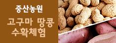 [가을가족나들이]가을 고구마캐기&땅콩캐기 수확체험-중산농원