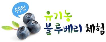 [여름체험특가]수우원 블루베리따기+물놀이+컵빙수+동물먹이주기(파주)